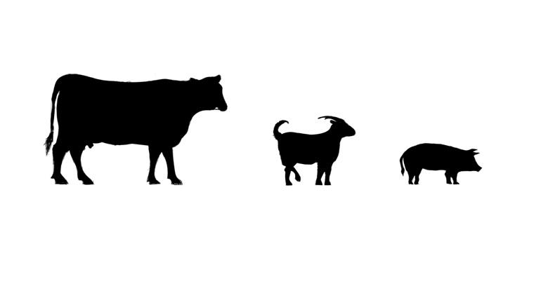 zwierze.jpg